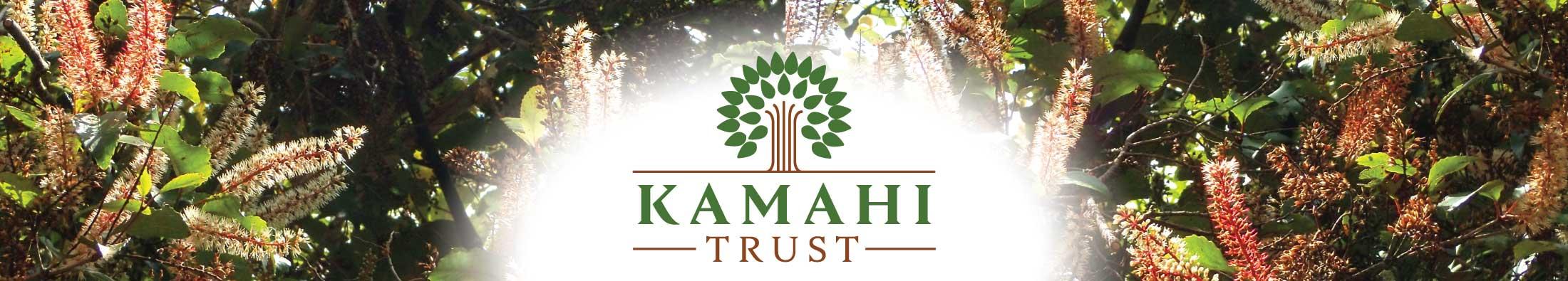 Kamahi-top2